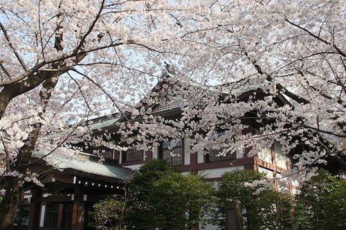 Yasukuni 7