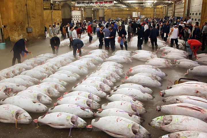cho ca tsukiji 3