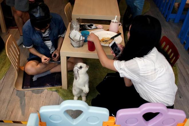 quan cafe Rabbitland 1