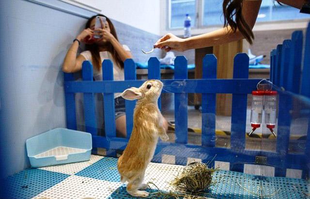 quan cafe Rabbitland 2