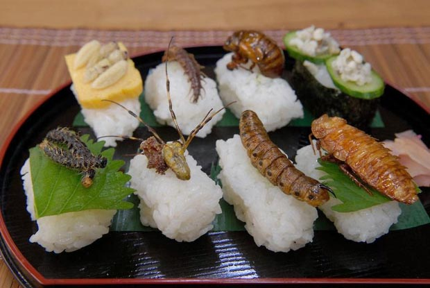Sushi con trung 2