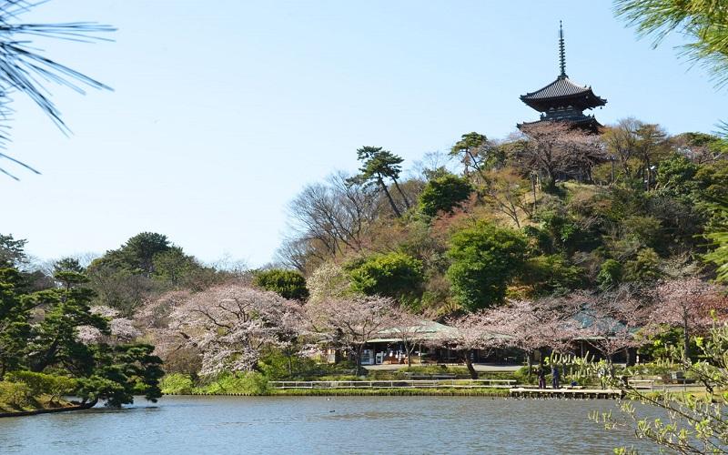 Tsurugaoka Hachimangu 3